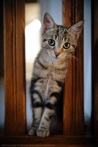 A striped, brown, tabby kitten looks at the camera from a staircase landing.