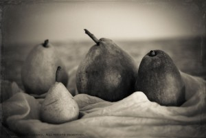 A variety of heirloom pears, both red and green, sit in rumpled silk in the this classic, sepia still life photograph.